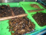 Ok to be fair not *everyone* eats fried bugs, but there they are...