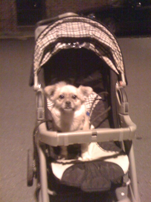 Note to self: Terry's not a fan of riding in a stroller, so don't even bother